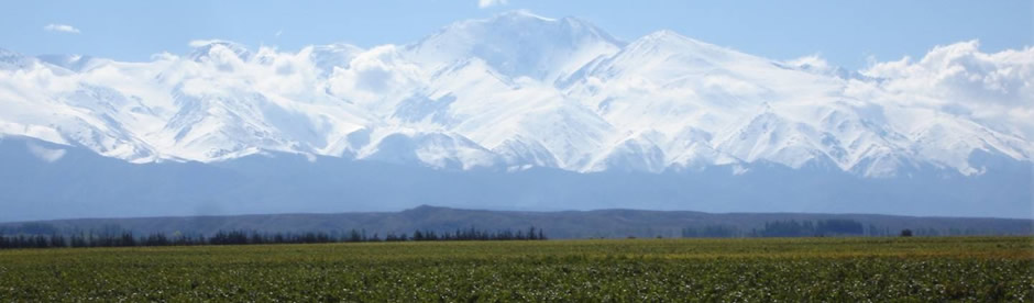 1150 Vineyard against the snow-capped Andes | Top Rated Wines from Mendoza, Argentina